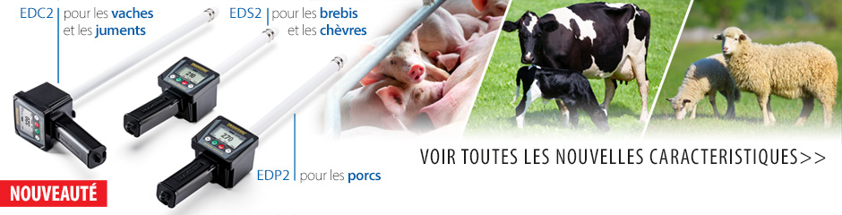 Détecteurs d'oestrus modernes dans l'élevage. Insémination efficace.